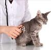 Ветеринарные клиники в Оршанке